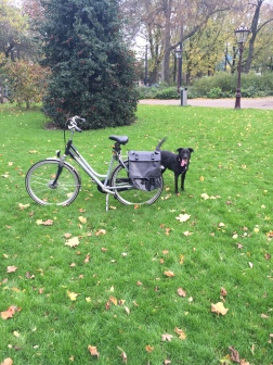 Lucy loves to bike too!